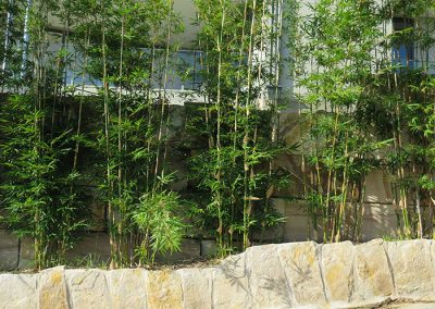 Native Landscaped garden